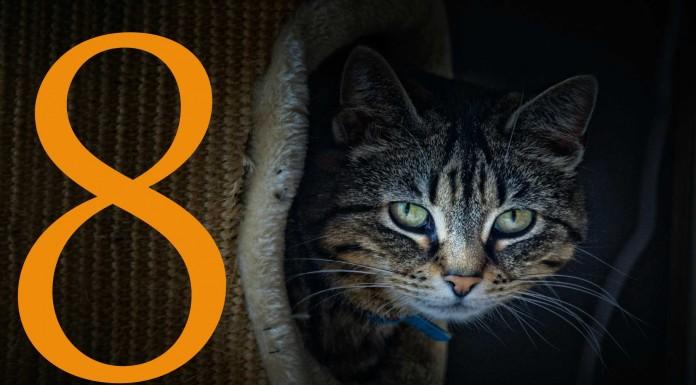 8 cosas que desconocías de los gatos