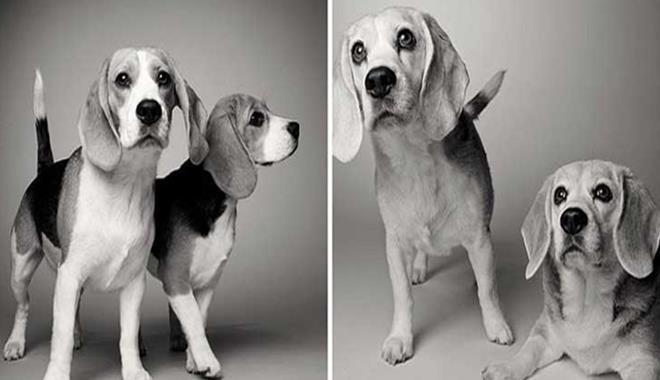Fotos-Mira-cómo-envejecen-los-perros (Copy)
