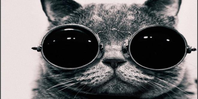 cat-with-glasses-550x550 (Copy)