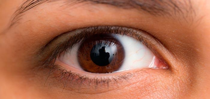 curiosidades de los ojos, ojos color café