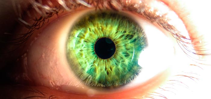 curiosidades de los ojos, ojos verdes, color de ojos
