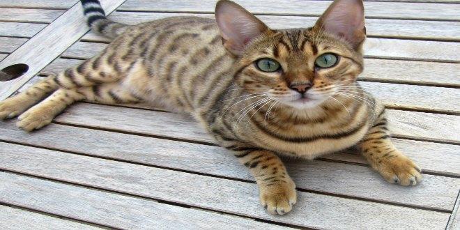 datos gatos