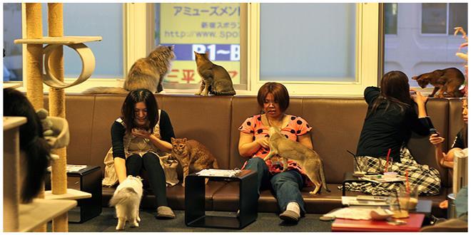 gatos empresa de japon