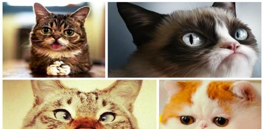 Los 7 gatos más famosos de Internet
