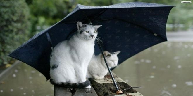 gatos lluvia (Copy)