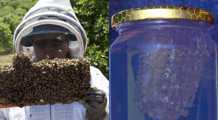 Cuando la miel se volvió AZUL