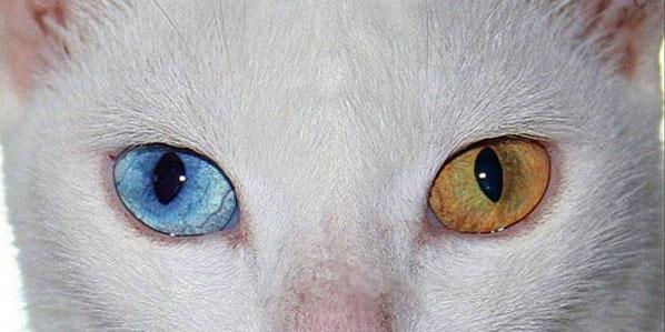 ojos datos, curiosidades de los ojos, heterocromía