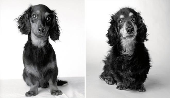 perro-joven-perro-adulto-lily (Copy)