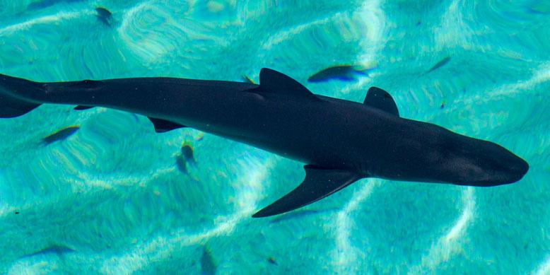 tiburón2