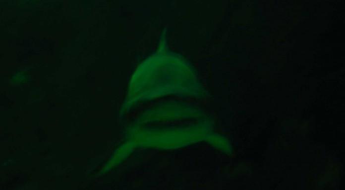 Y si los tiburones desapareciesen?