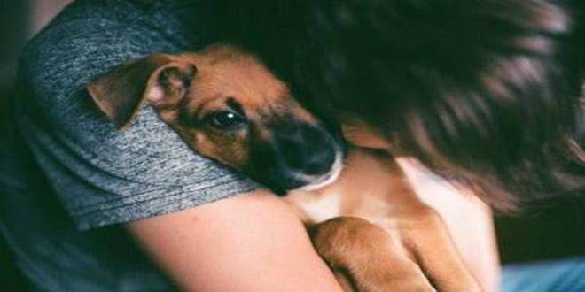 abrazo perro Copy
