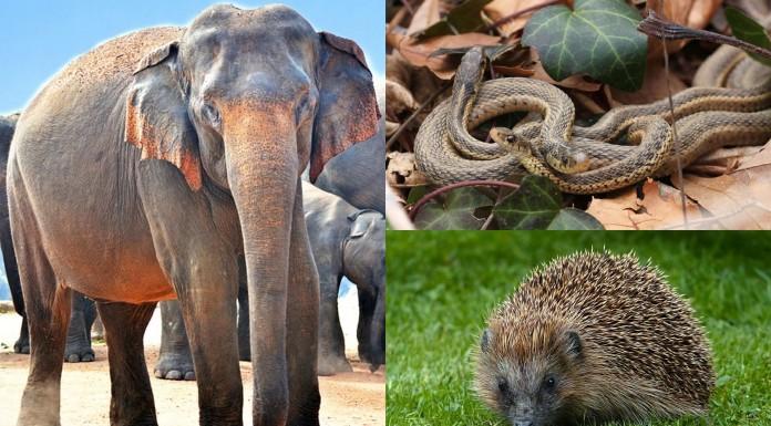 5 animales con curiosos ritos de apareamiento