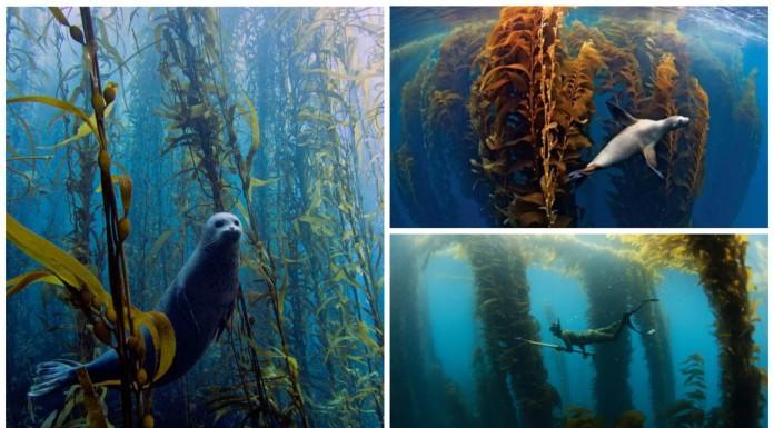 3 mágicos bosques subacuáticos: un mundo de fantasía natural