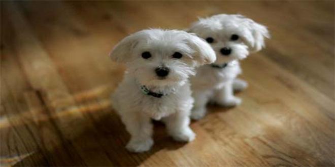 dos perritos