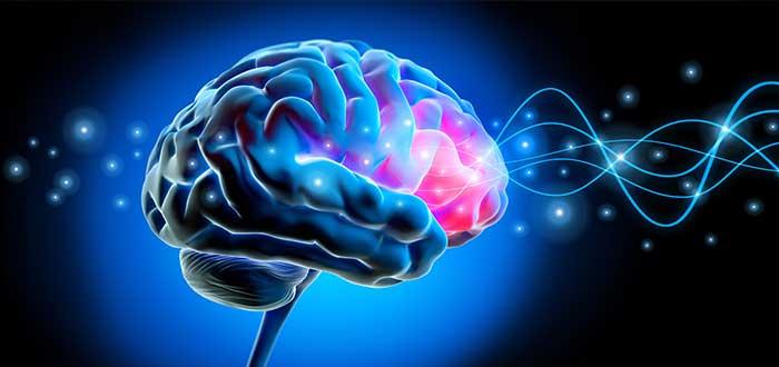 efectos del estres en el cerebro