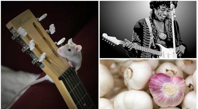 ¿Por qué los dedos de los guitarristas huelen a ajo?