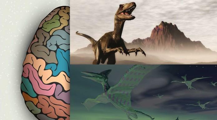 ¿Cuán INTELIGENTES eran los dinosaurios?