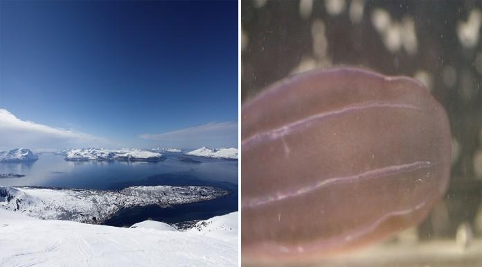 """El """"moco"""" púrpura que ataca a Noruega"""