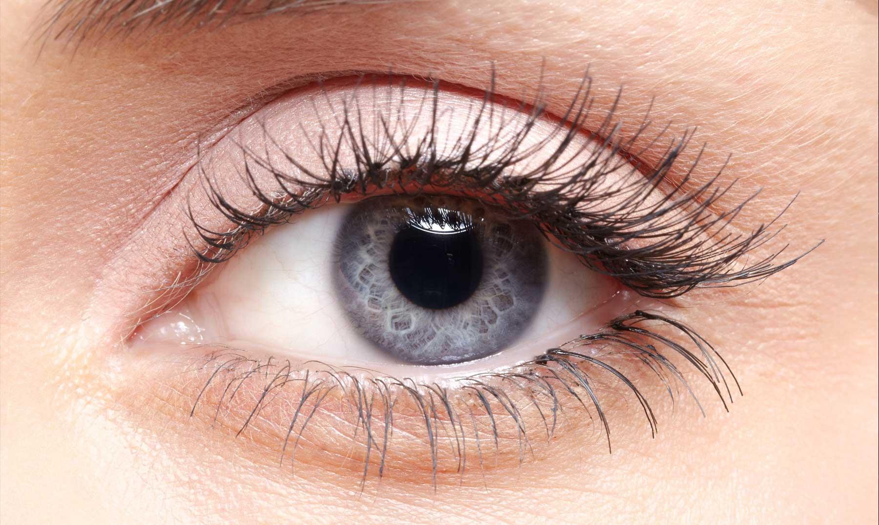 Ojos Grises El Secreto De Esta Bella Rareza Con Imágenes