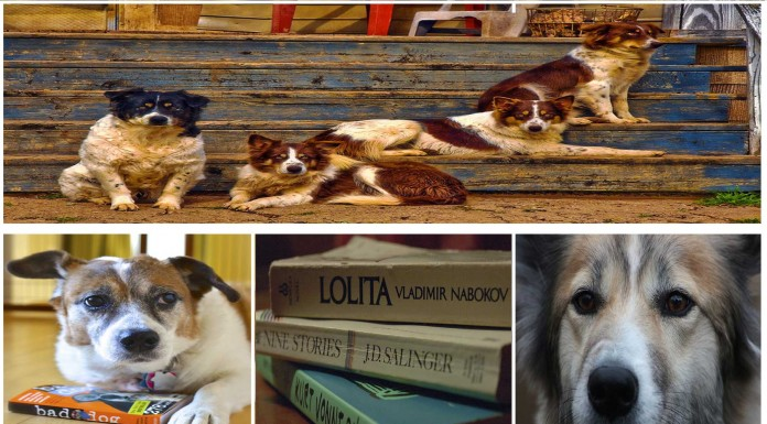 Los perros, los mejores amigos de los escritores