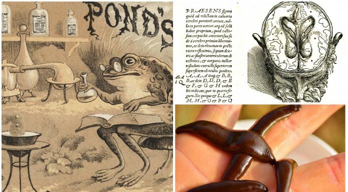 5 antiguos remedios que ¡aún se usan y funcionan!
