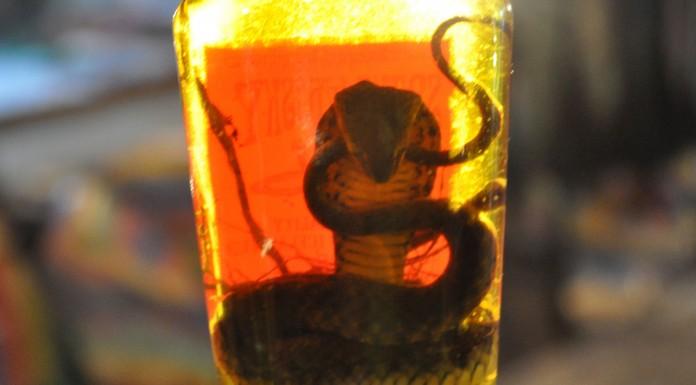 El vino de serpiente que si abres...¡Podría morderte!