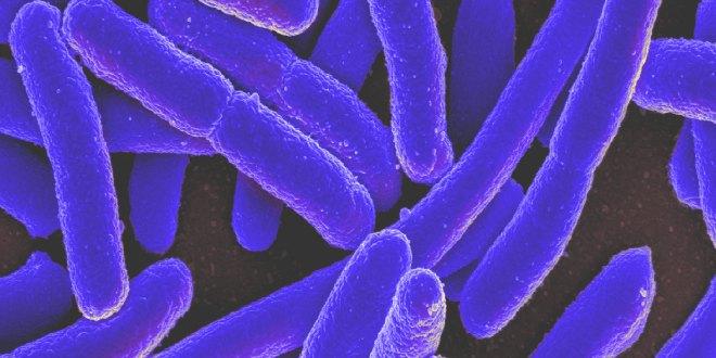 superbacteria2