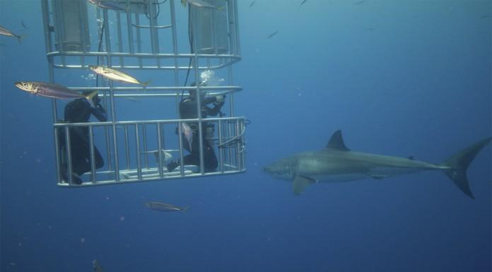 ¿Qué música ATRAE a los grandes tiburones? ¿Lo adivinas?