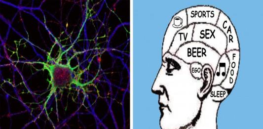 El extraño caso de las 2 neuronas masculinas