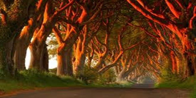 The Dark Hedges, un camino de película de terror (Copy)