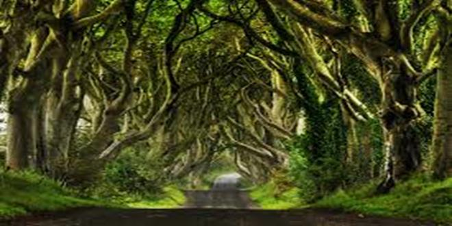 The Dark Hedges, un camino de película de terror en Irlanda del Norte (Copy)