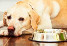 alimentos que no pueden comer los perros