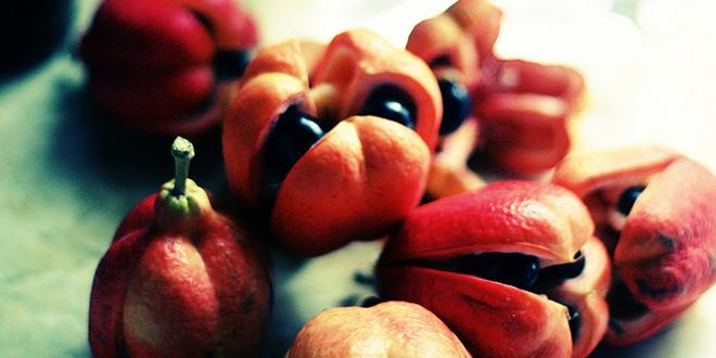 alimentos venenosos2