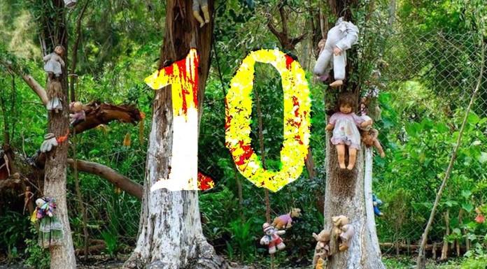 10 datos INQUIETANTES sobre el bosque de los suicidios de Japón