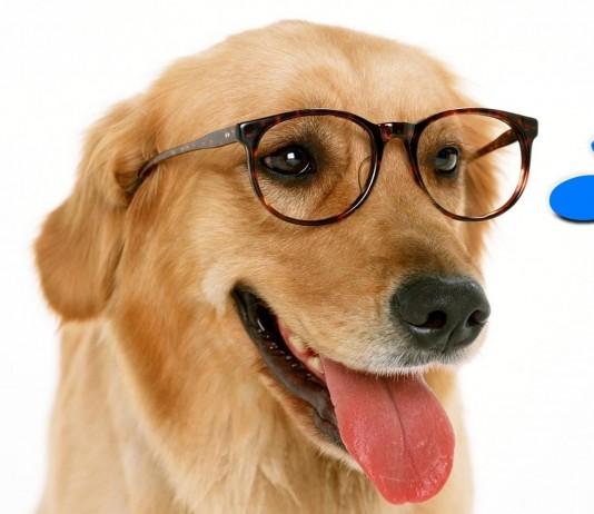 ¿Existe la raza de perro MÁS inteligente?