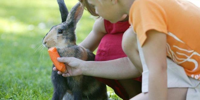 niños con conejos (Copy)