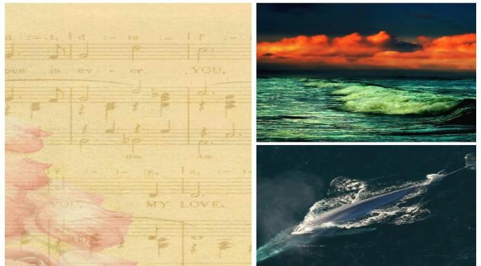 La impresionante sinfonía del mar