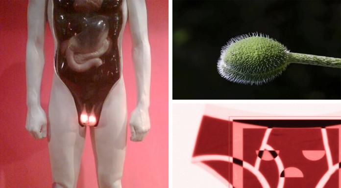 cosas que debes saber de los testículos