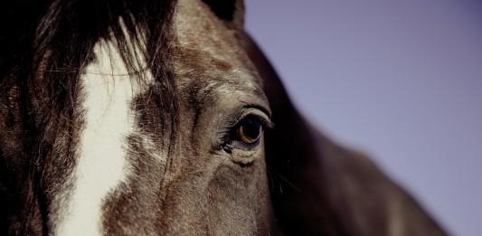 DEMOSTRADO: Los caballos pueden leer tus emociones