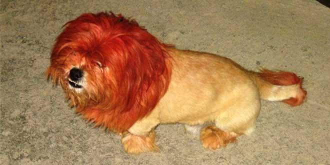 perro león
