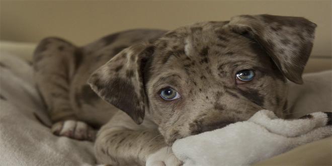 ¿Qué pasa en el cerebro de tu perro cuando te ve?