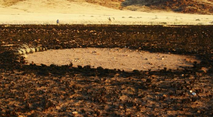 Más misterio: ahora los círculos de Namibia también en Australis