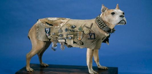 El Sargento Stubby: el perro que sirvió durante la 1º Guerra Mundial
