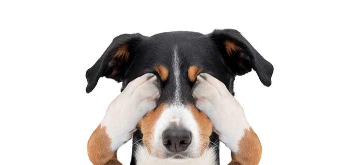 fobia a los perros