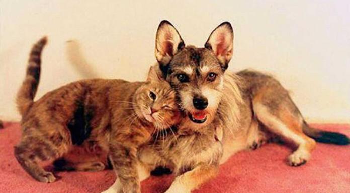 Ginny la perrita que salvó a más de 1000 gatos