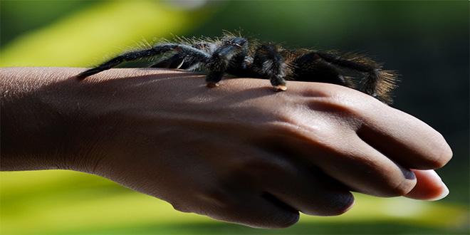 ¿Conoces la araña más grande del mundo?