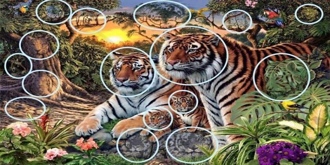 Tigres resuelto