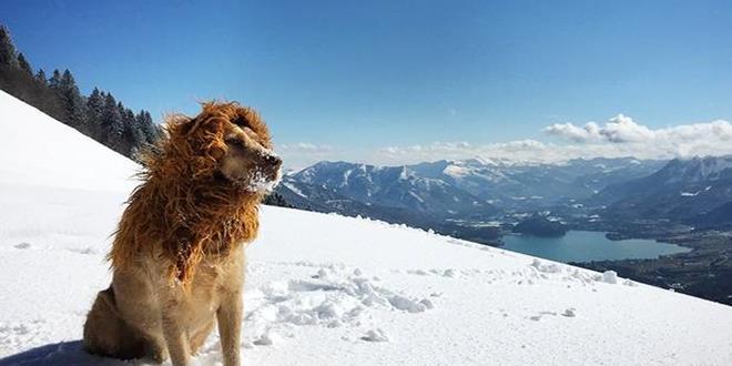 Tschikko, el león que representa a todos los perros callejeros