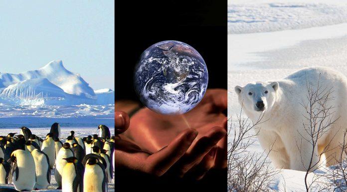Polo Norte y Polo Sur: 7 diferencias que conocer