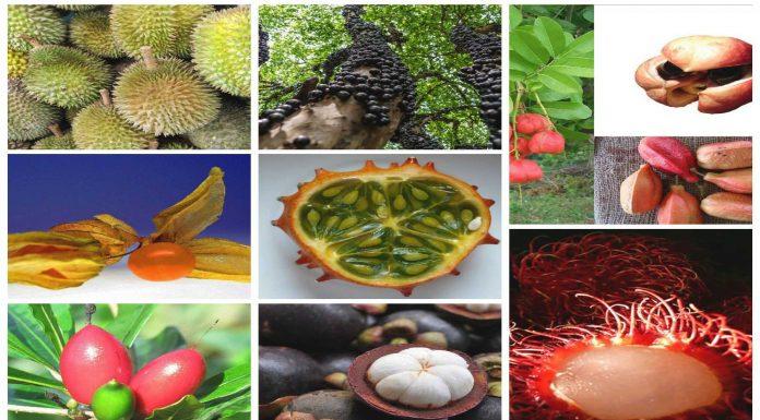 8 frutas MUY raras que ¿probarías?